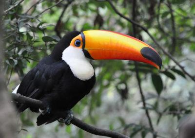 Walk11-toucan